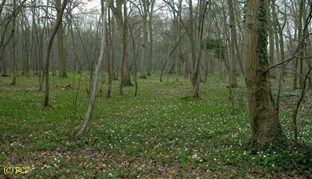 4月初めの森!
