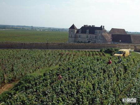 クロー・ド・ヴジョーのブドウ畑