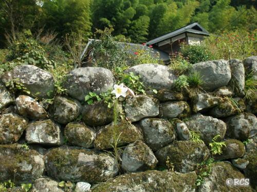 棚田の石垣です。お城の石垣のように立派!