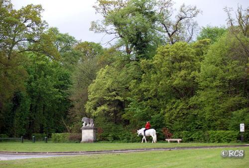 乗馬するために森に入る人