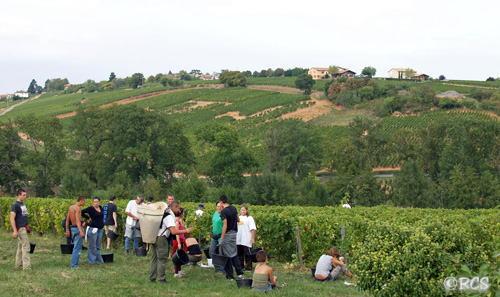 ブドウの収穫をしていた人たち