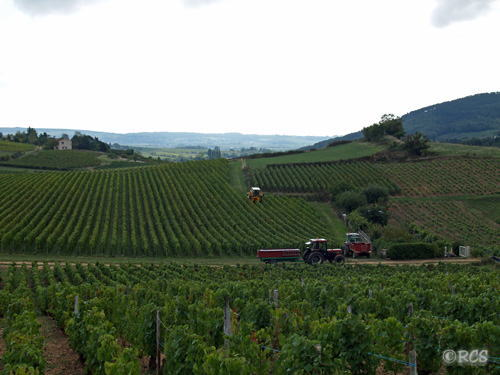 機械でのブドウ収穫