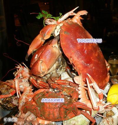 2種類の蟹