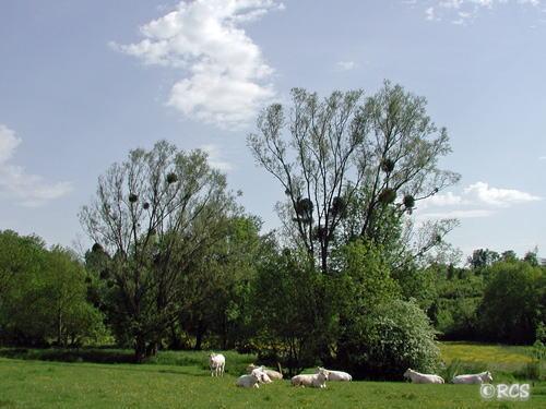 ブルゴーニュの牧場です