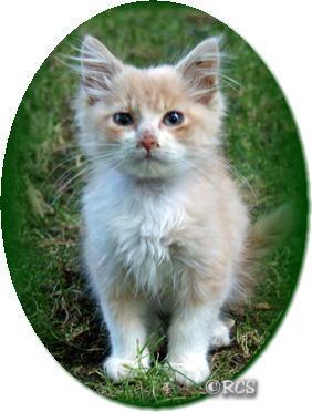里親を見つけたノラ猫