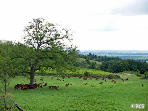 クリックすると、この写真を入れた「ヤギたちの住む村」の記事が開きます