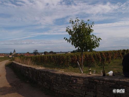 ロマネ・コンティのブドウ畑を背にして撮影